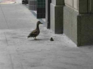 duck04